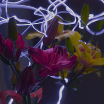 Flower lights von Max Nemo Mertens