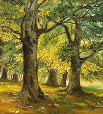 In park by Apostolescu  Sorin