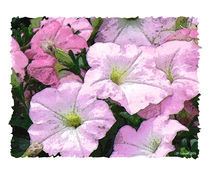 Watercolor Petunias by © CK Caldwell