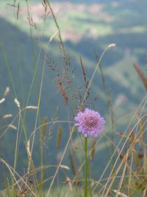 Bergblume von Ka Wegner