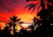 Sky of Palms by Karina Stinson