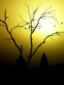 Silhouettes by Karina Stinson