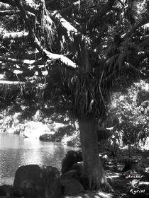 Taiwanese Tree von Renzo Roso