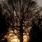 Tree-sun-evening-16x20-9582