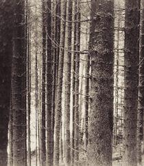trees by Dragos Malaescu