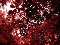 Redcurrant and alone. von freak-of-nature