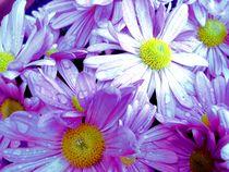 Spotlight flower. von freak-of-nature