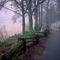 591-af-ceperley-walk-in-fog-090031-001-version-12