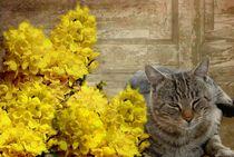Katzenenträume by Elke Balzen