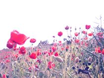 Poppy crowds. by freak-of-nature