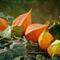 Herbstglhen