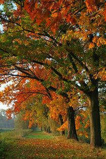Herbstlich von Jana Behr
