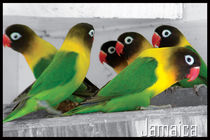 Birds of Jamaica by Robert Farr