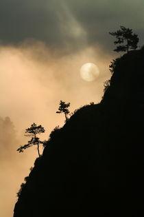 Hangbäume by Jana Behr