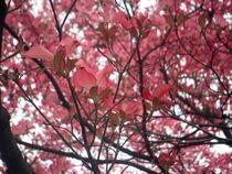 Frühling I by bretagne-olan