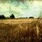 Tex-sunfields015