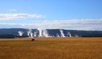 Yellowstone Landschaft mit Bison von buellom