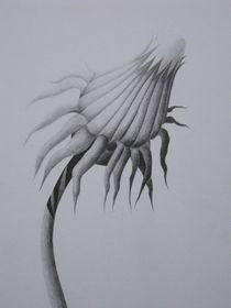 Löwenzahnblüte von Katja Finke