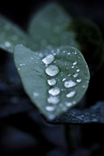 Row-of-droplets