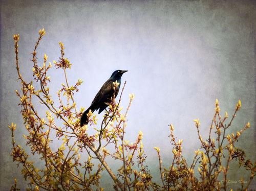 Bird-on-a-tree