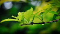 Wrong leaf, right leaf by Pranav K