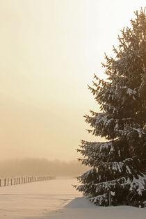 Tanne im Winter von Jana Behr
