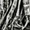 Rainforest-fig-trunk