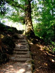 Tree Pathway by Charlotte Gorzelak