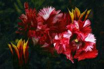 Tulpen von pahit