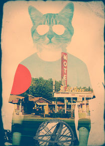 The Cat von Ali GULEC