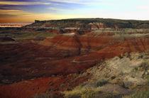 Canyon von Tony Minchew