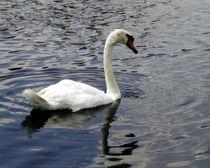 Swan von Tony Minchew