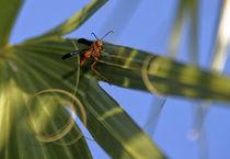 Wasp von Tony Minchew