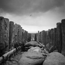 Sea Groins, Lynmouth Beach, North Devon, 2011 von Paul Cooklin