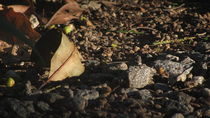 Gravel and Leafs  by Carlos Reisig