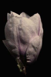 Img-5336-magnolie4