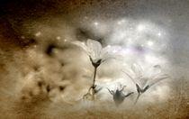 Sternenstaub by lefeber