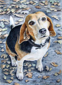 Beagle Eyes by Nicole Zeug