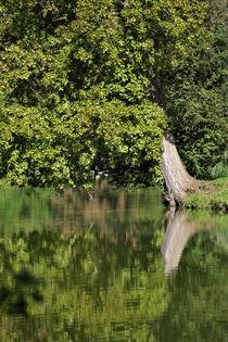 Baum am See von Jana Behr