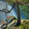 Cascade-tree-2010