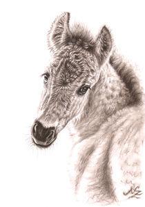 Wildpferd-fohlen-mittel