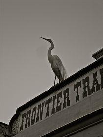 Stork  von Setareh Hs
