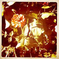 Grandma's Garden von iulia-spin
