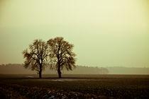 Herbstbaum von Michael Krause