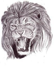 Lion von Daniele Grigoletto