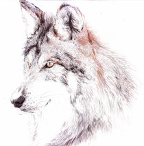 Portrait - Wolf by Daniele Grigoletto