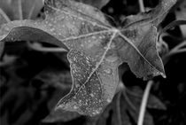 Wet Leaf von Aaron Wood