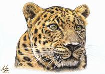 Leopardgross-ofarbst