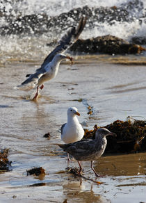"""""""Look What I Got!"""" - Seagulls by Eye in Hand Gallery"""