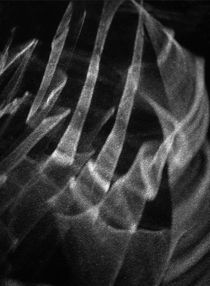 A claw von daca